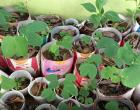 Plantio de mudas marca Dia da Árvore em Marataízes