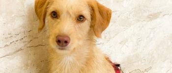 SOS Patas e Mãos realiza evento de adoção de cães e gatos em Cachoeiro