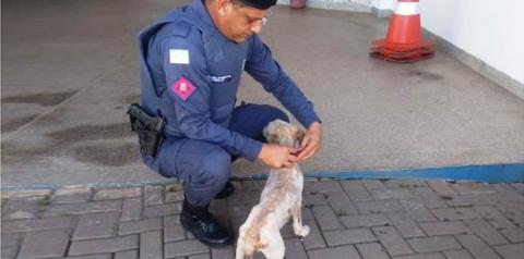 Policial Militar resgata cãozinho abandonado em Anchieta