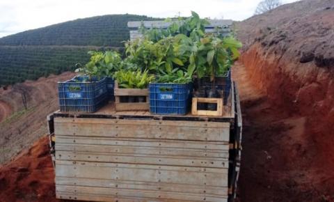Proprietários rurais investem na conservação ambiental por meio do Programa Reflorestar