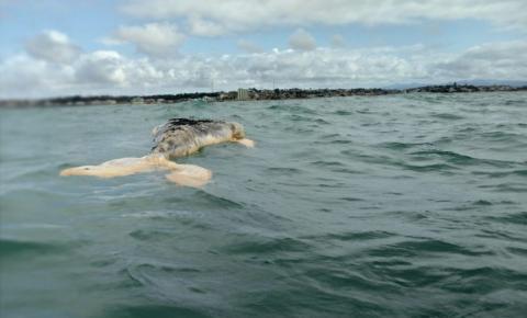Marataízes: Baleia é encontrada morta em praia