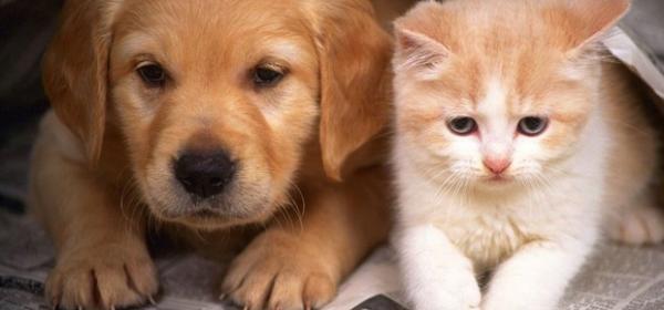 Fim da quarentena exige adaptação no convívio com os pets